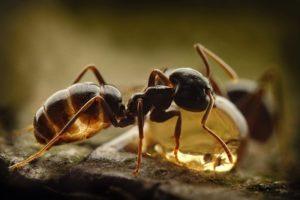 Перевозка муравьиной кислоты